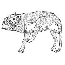 Panther zum online Ausmalen