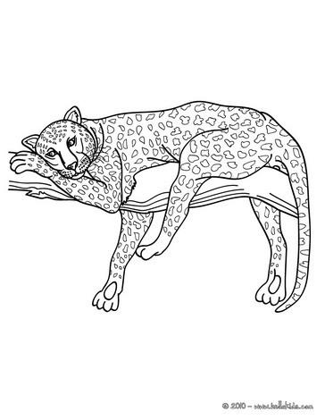 Panther Zum Online Ausmalen Zum Ausmalen De Hellokids Com