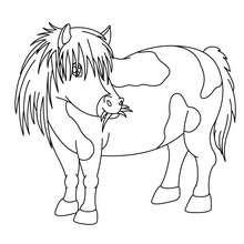 Pony zum Ausmalen