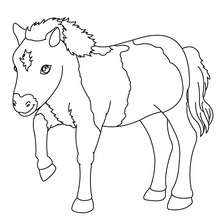 Pony zum online Ausmalen