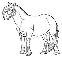 Pony Bild zum Ausmalen
