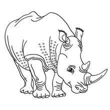 Nashorn zum online Ausmalen