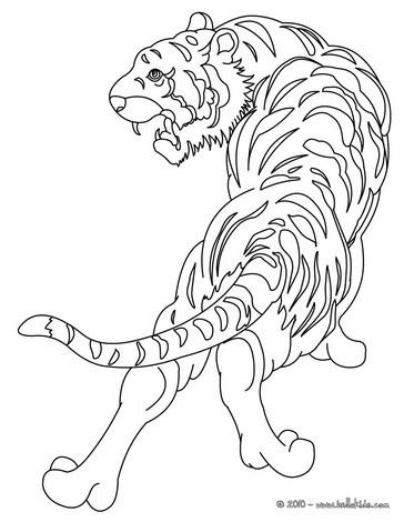 Tiger Zum Ausmalen Zum Ausmalen De Hellokids Com