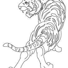 Tiger Bild zum Ausmalen