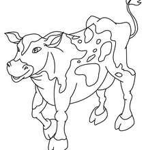 S e kuh zum ausmalen zum ausmalen - Vache normande dessin ...