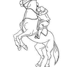 Mann trainiert ein Pferd zum Ausmalen