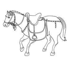 Rennpferd zum Ausmalen