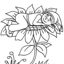 Wicht schläft auf einer Blume zum Ausmalen