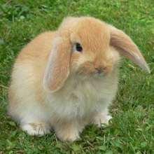 Kaninchen Ausmalbilder Basteln Kostenlose Spiele Bilder Für