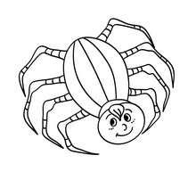 Achtbeinige Spinne zum Ausmalen