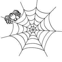 Spinne in ihrem Spinnennetz zum Ausmalen