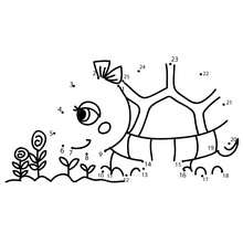 Schildkröte Punkte verbinden