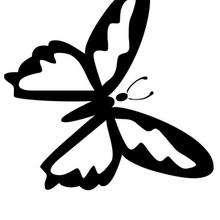 Schmetterling Anmalen