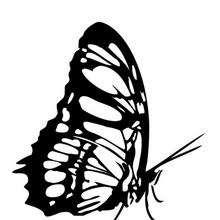 Monarchfalter zum Ausmalen