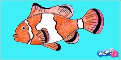 Wie Malt Man Wie Man Einen Clownfisch Malt De Hellokids Com