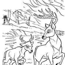 Bambi 42