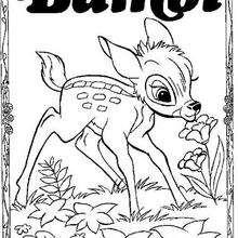 Bambi 60