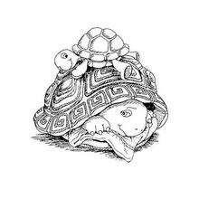 Harriet Schildkröte mit ihrer Mutter zum Ausmalen