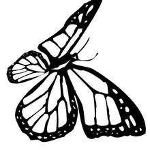 Monarchfalter Malbogen