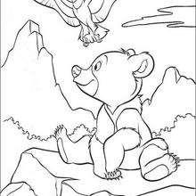 Bärenbrüder 39