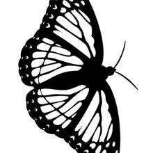 Druckbarer Schmetterling zum Ausmalen