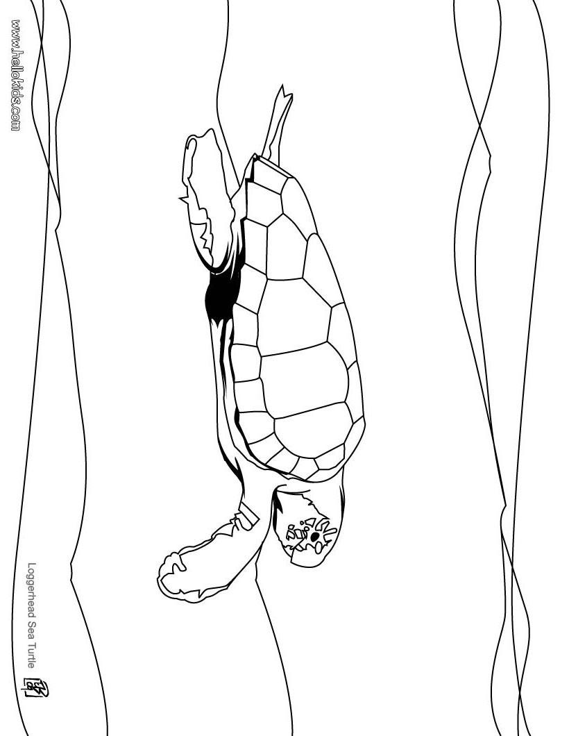 Schildkröte : Ausmalbilder, Kostenlose Spiele, Bilder für Kinder ...