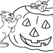 Halloween Kürbis und Katzen
