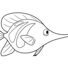 LIEBER FISCH Malbild