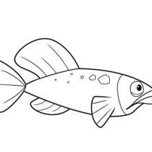 Oceana Fisch Ausmalbild Zum Ausmalen De Hellokids Com