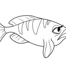 OCEANA FISCH zum Anmalen