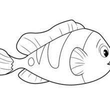 SCHÖNER FISCH zum Ausmalen