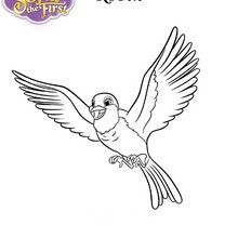 ROBIN die Taube