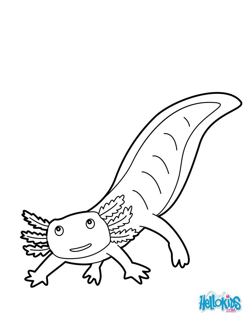 Axolotl zum ausmalen - de.hellokids.com