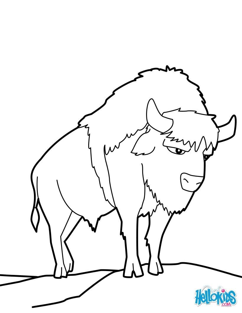 Der wisent zum ausmalen - Coloriage bison ...