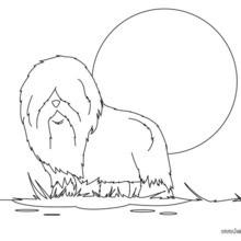 Bobtail zum Ausmalen