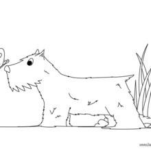 Terrier zum Ausmalen
