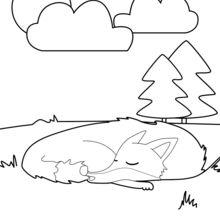 Fox schlafen