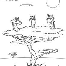 Giraffen in einem Baum