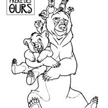 Tiere Bärenbrüder