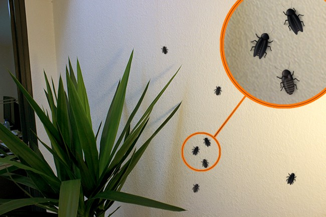 Insekten Trügerischer Schein