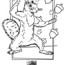 Sandy das Eichhörnchen