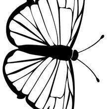 Grün-weiss gemaserter Schmetterling zum Ausmalen