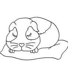Schlafendes Meerschweinchen zum Ausmalen