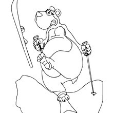 Braunbär-Skifahren