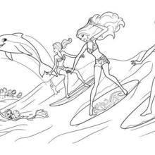 Die Surfer und Zuma