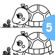 SCHILDKRÖTE finde die 5 Unterschiede