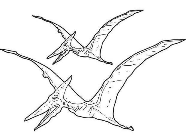 ausmalbilder dinosaurier stegosaurus  kostenlose