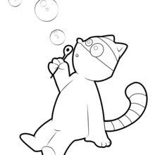 Waschbär, der Blasen macht