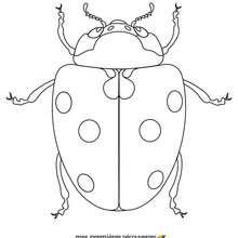 Einfärben eines Marienkäfers