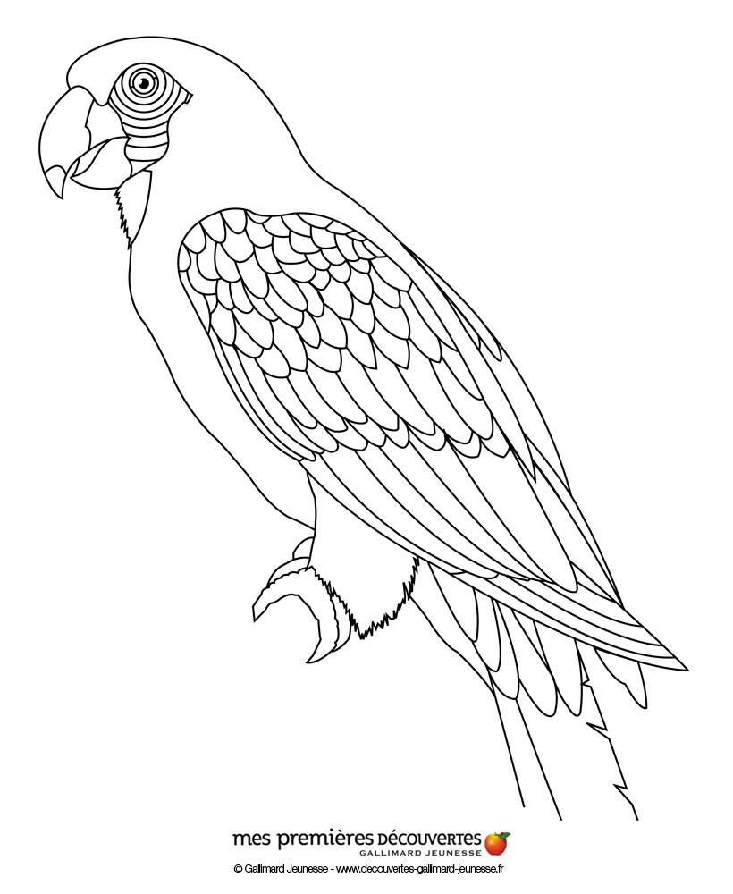 Färben eines Papageien